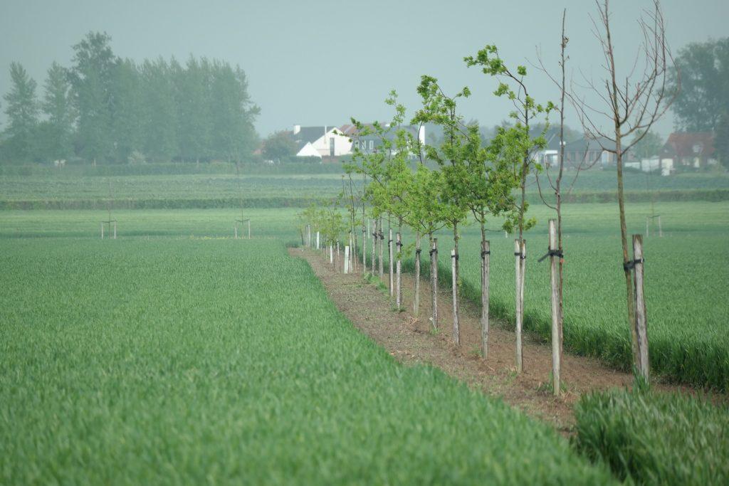 Agroforestry Vlaanderen