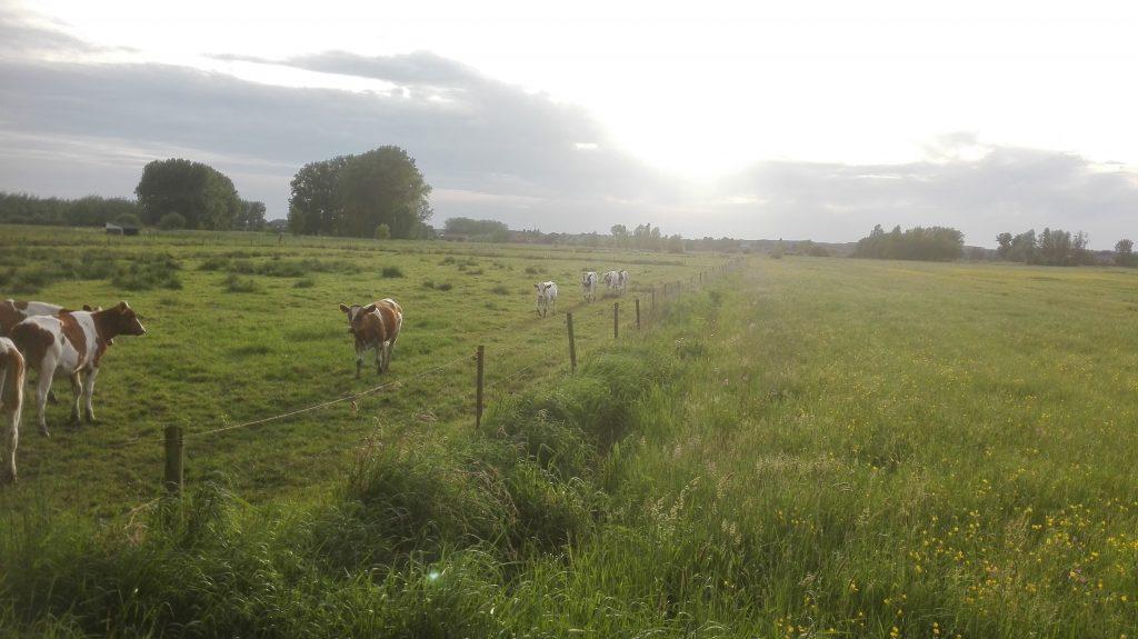 Berlare-Laarne-Wetteren-Wichelen