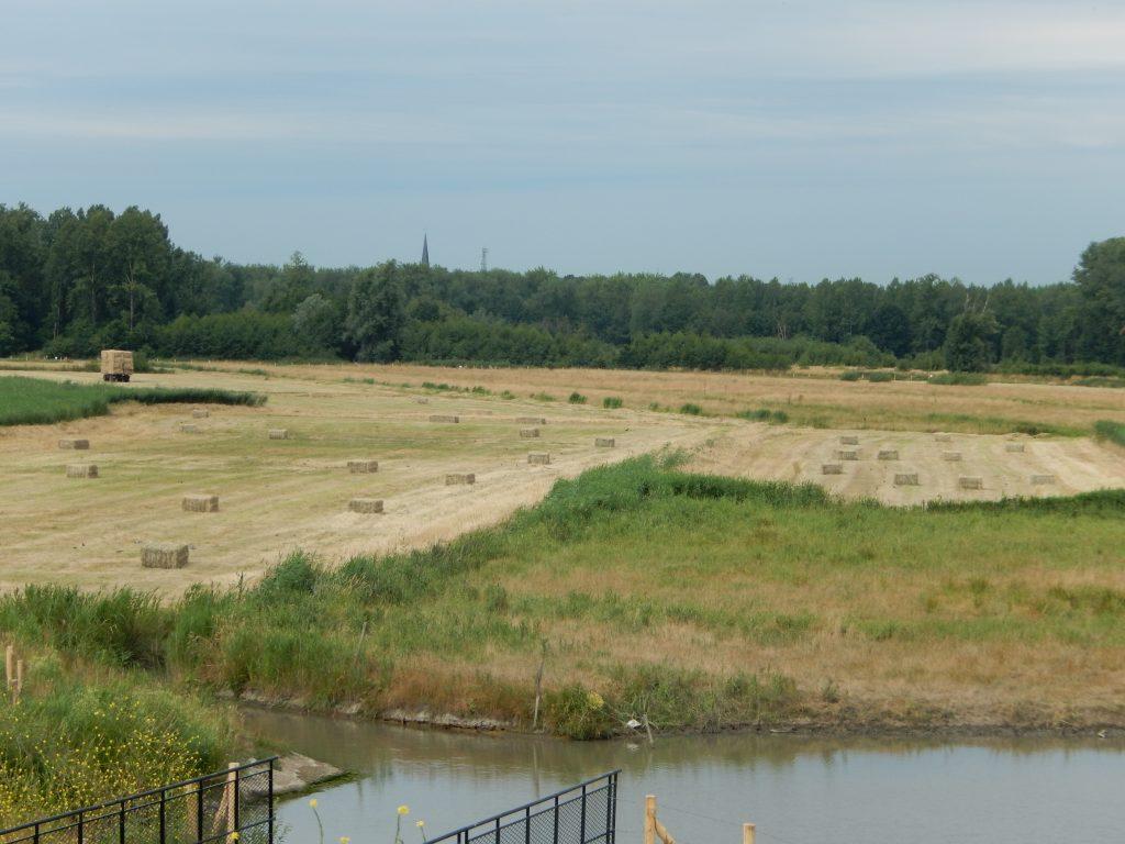 Wateropvang voor vollegrondteelt - een grondig af te wegen investering