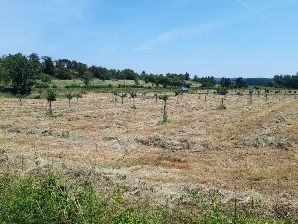Landschapsboeren in Haspengouw en Voeren