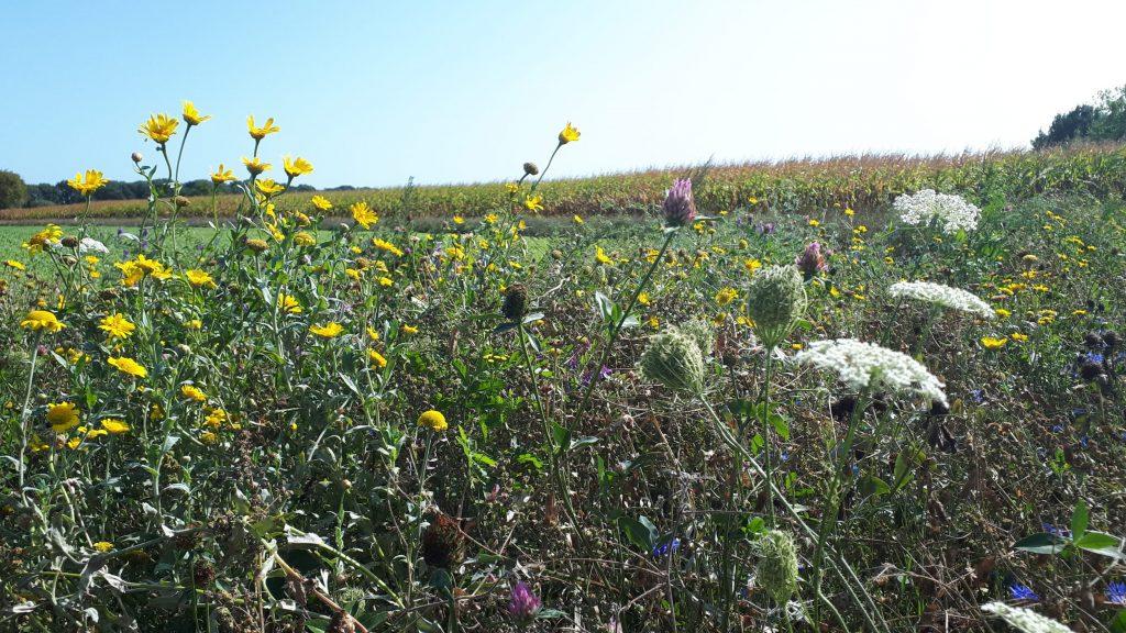 FAB: Monitoren van insecten in de bloemenrand